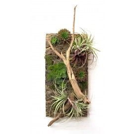 "LW1020 Mixed Succulents, Tillandsia, Mosses and Ghostwood on Natural Wood Cork 20""H X 20""W X 11""D"