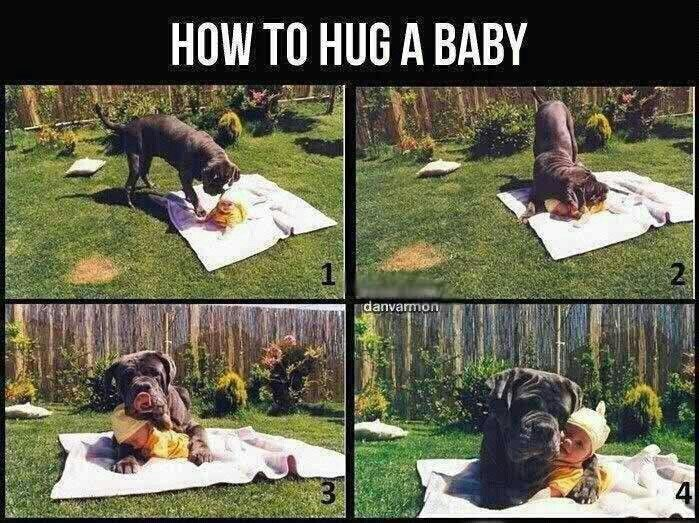 Dog hugging a baby :)
