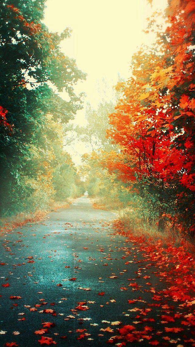 Autumn Rain Fall Wallpaper Nature Wallpaper Beautiful Tree