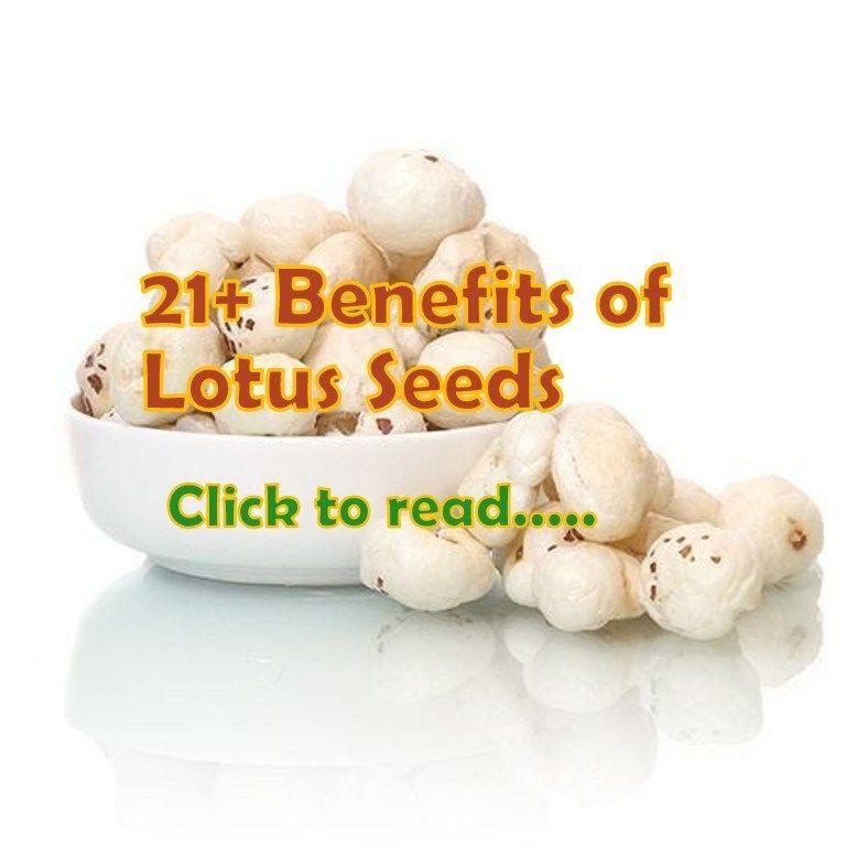 21 Lotus Seeds Benefits Phool Makhana Or Fox Nuts Nut