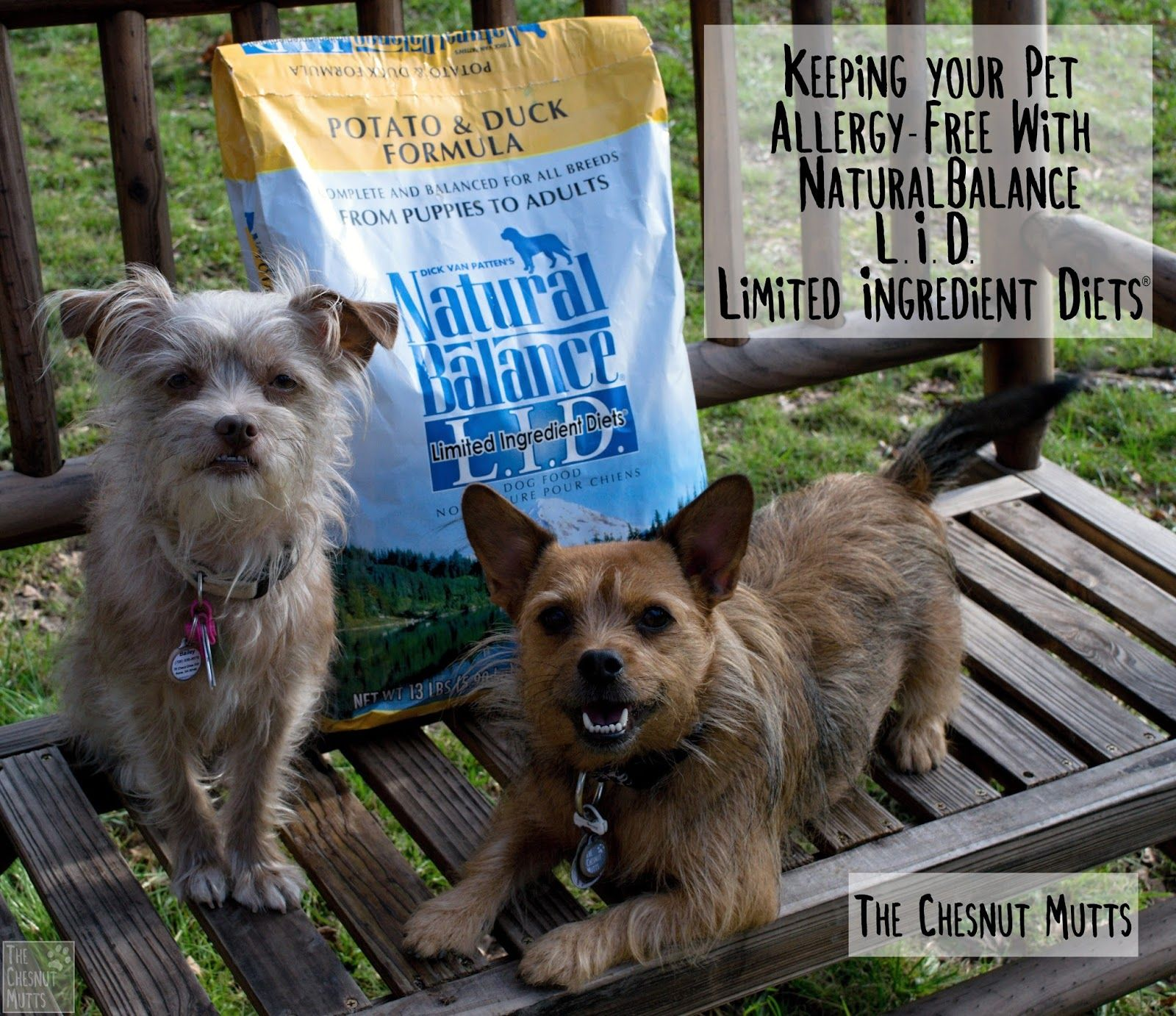 Brand Spotlight Keeping your Pet AllergyFree With