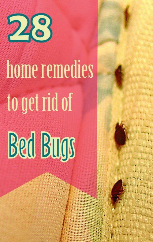 28 Effective Home Remedies To Get Rid Of Bed Bugs Rid Of Bed