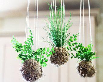 kokedama suspendu home plants flowers pinterest suspendu. Black Bedroom Furniture Sets. Home Design Ideas