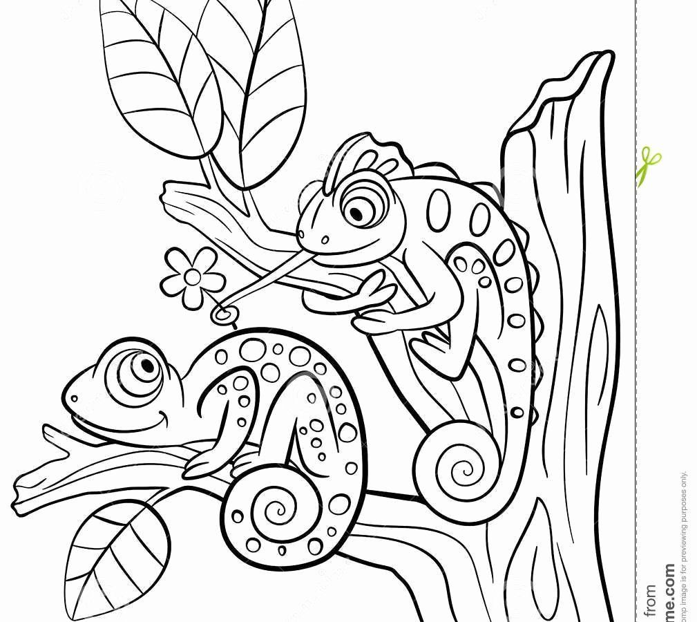 Coloring Cartoon Lizard in 2020 Animal coloring pages