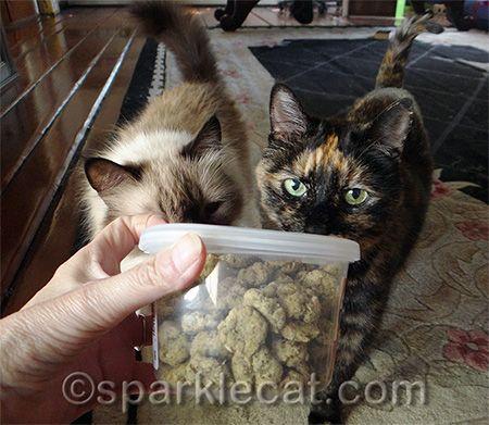 How To Make The Tuna Catnip Kitty Cookies Cat Snacks Cat Care