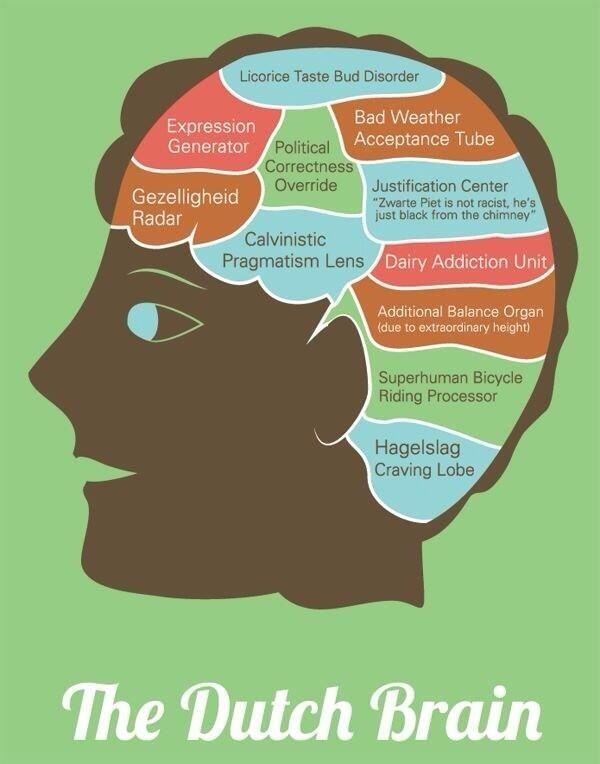 The Dutch brain