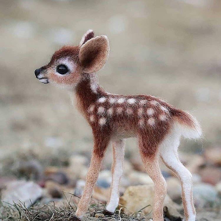 Découvrez ces 20 bébés animaux rarissimes et très peu connus !