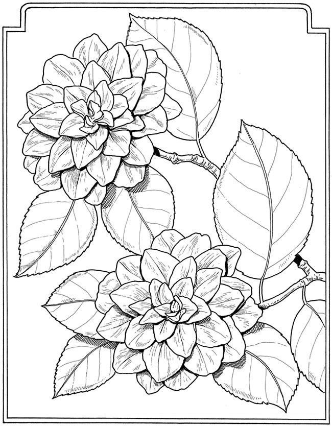 Flowers Flower Coloring Pages Flower Drawing Coloring Books