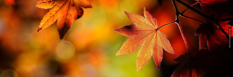 Crisp Autumn Leaves Twitter Header Cover | Cover pics for facebook,  Facebook cover, Cover pics