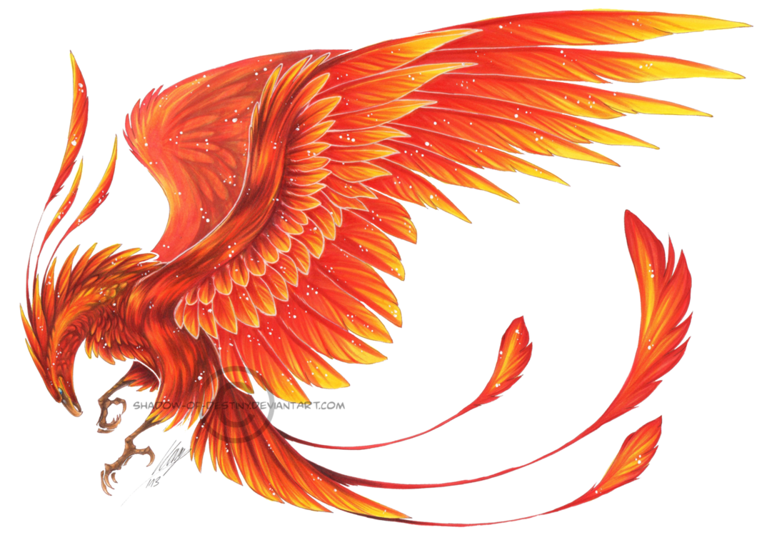 Phoenix tattoo - probably never get one, but it's cool. And Phoenix symbolism is kinda awesome too. ;)