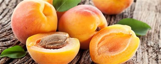 Dyrk dine egne aprikoser i en krukke - Hagetips,  Frukthage,  Frukt,  Mat,  Potteplanter