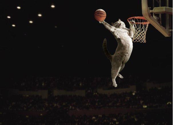 Баскетбол картинка прикольная