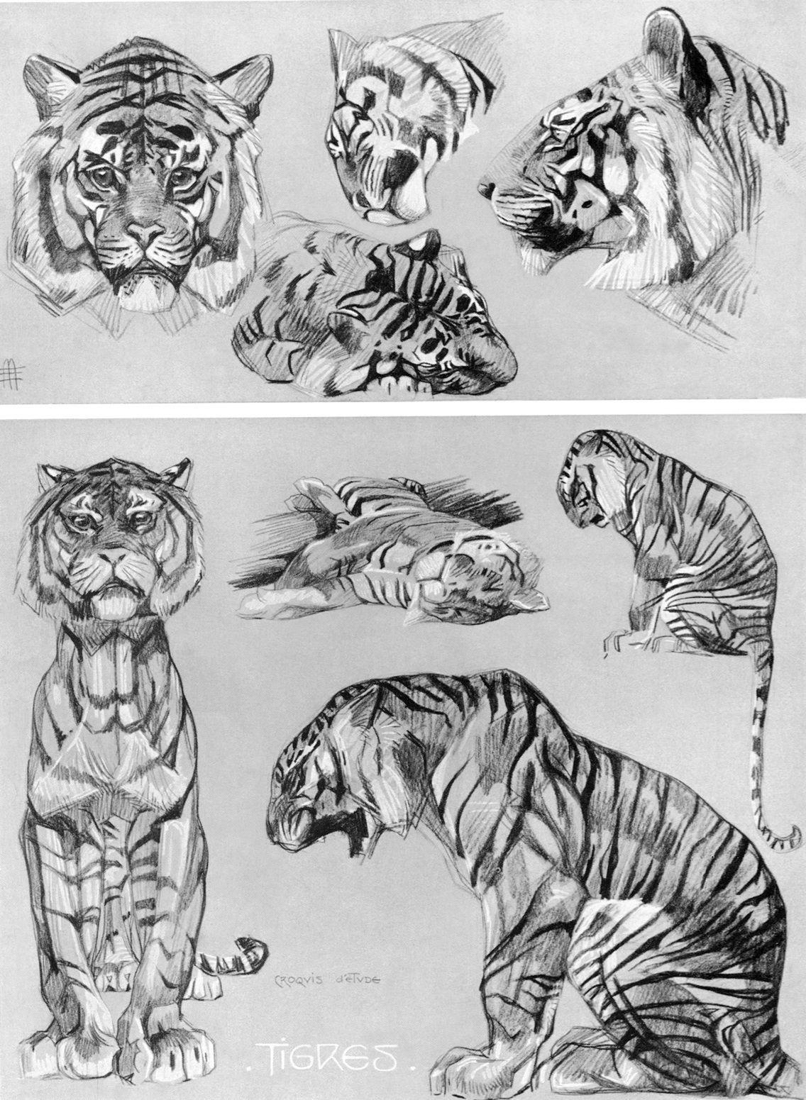 Art of Mathurin Méheut (18821958) Dessin tigre, Croquis