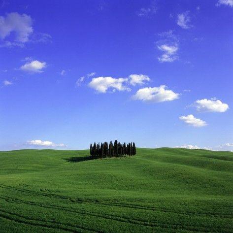 cypress trees  landscape