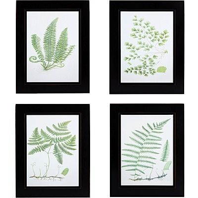 Framed fern prints from Nell Hills - I have these hanging in my foyer.  they are a moving away gift from some wonderful friends!