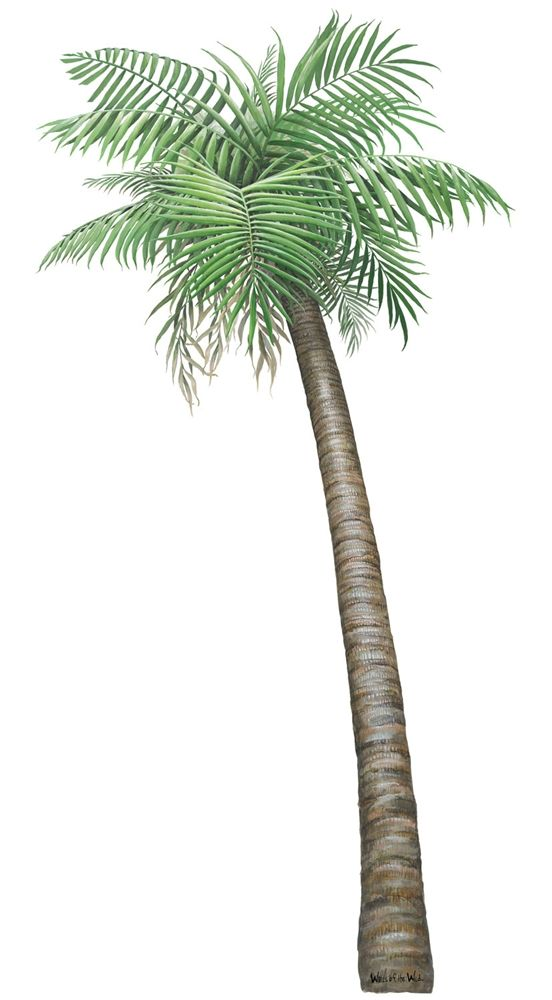 Small Arecaceae Palm Left Sticker  sc 1 st  Pinterest & Small Palm Tree Wall Decal (36 in. x 72 in.) | Palm Wall decals and ...