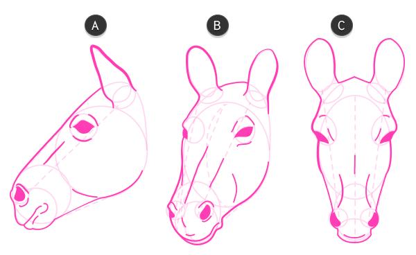 How To Draw Zebra Head 4 Animals Pinterest Animal Drawings