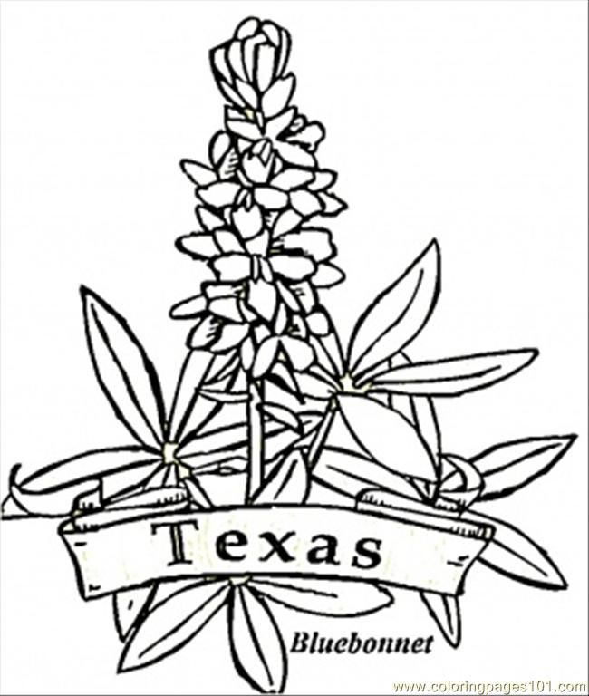 Bluebonnet Coloring Page