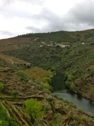 Amazing view of Douro Valley from Quinta do Panascal, Portugal
