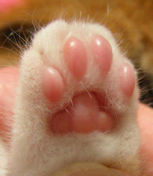 Little pink feet <3