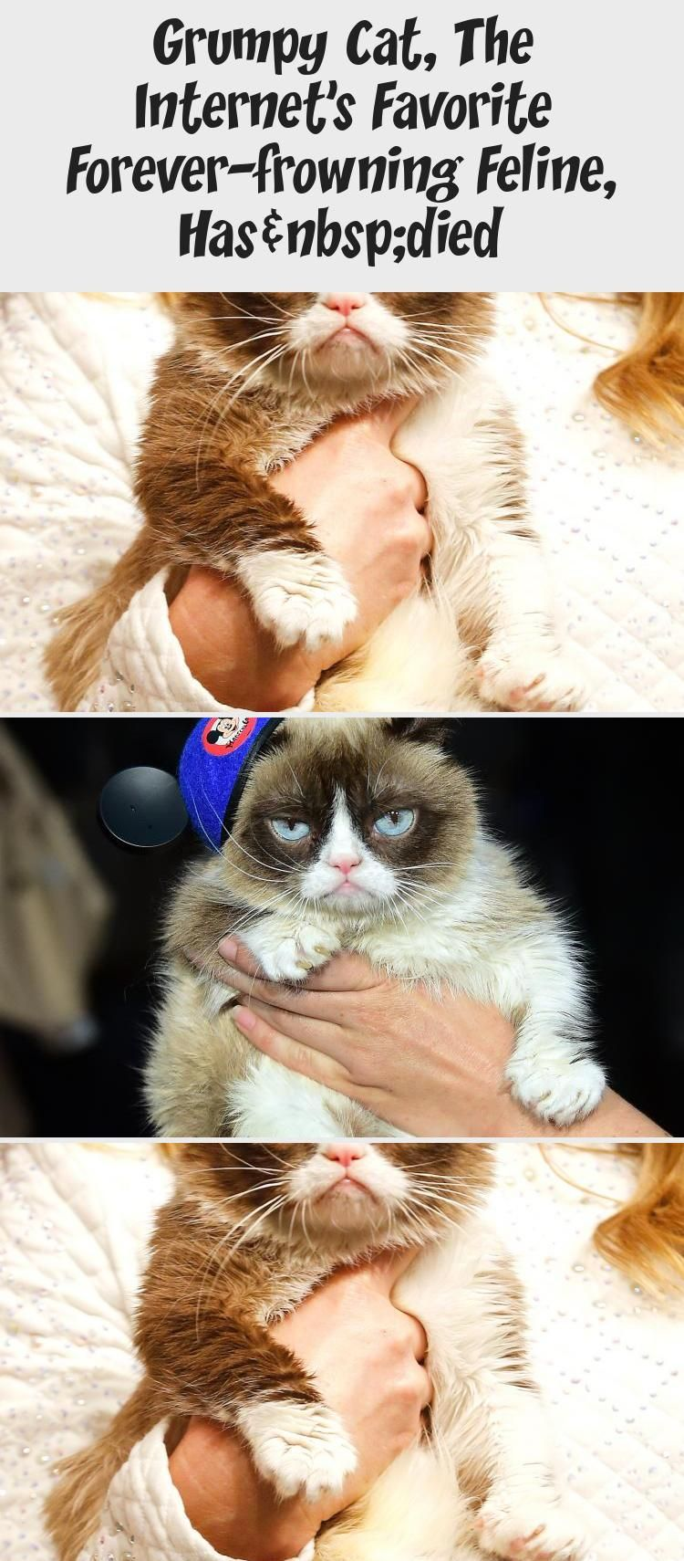 Grumpy Cat, The Favorite Foreverfrowning