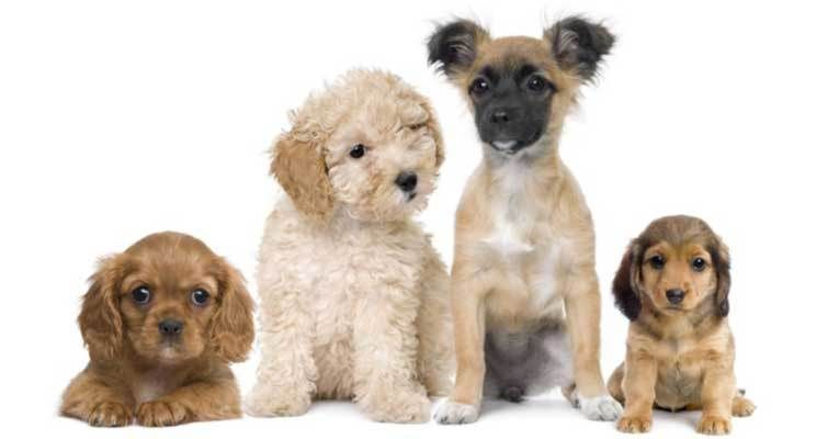 Pet Care Online With Images Dog Business Dog Breeds