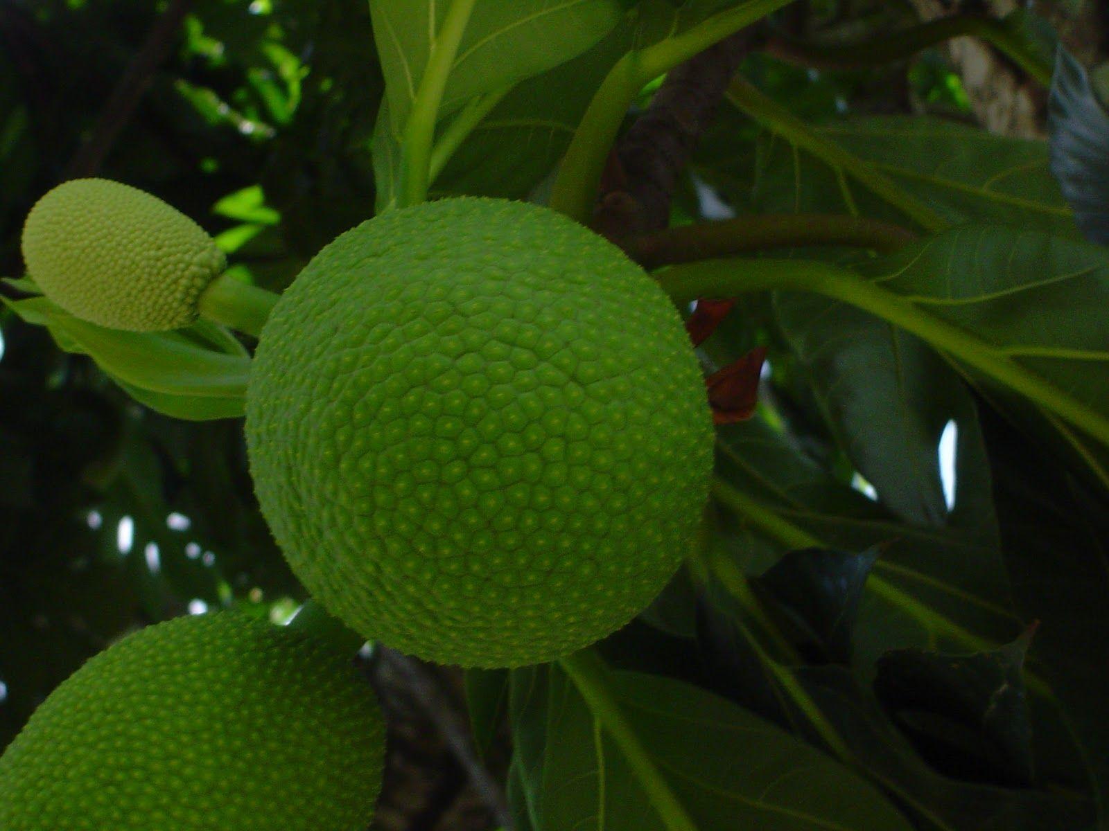 Pin Em Brazilian Tropical Fruits