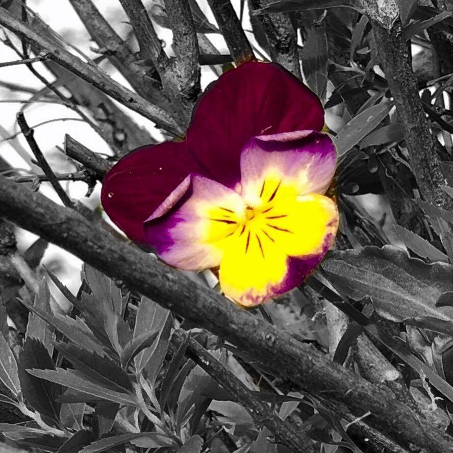 Foto con sfondo bianco app