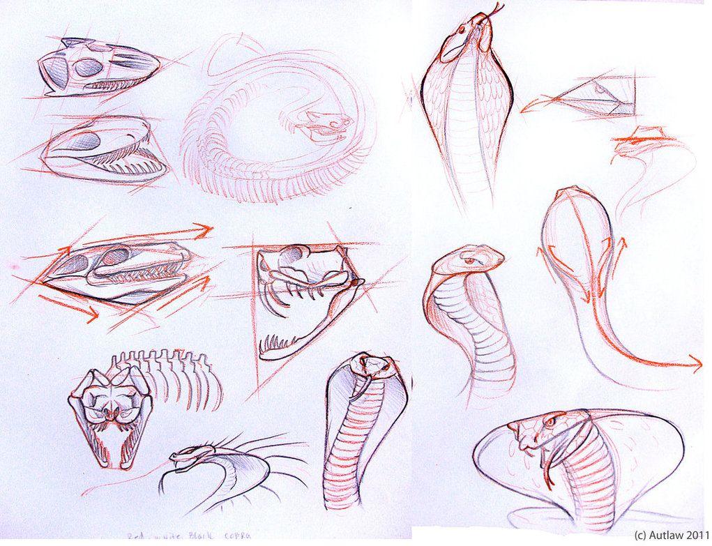 Snakes by Autlaw.deviantart.com on @DeviantArt