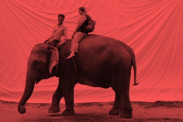 Ever Wanted To Ride An Elephant? You'll Wanna Think Twice