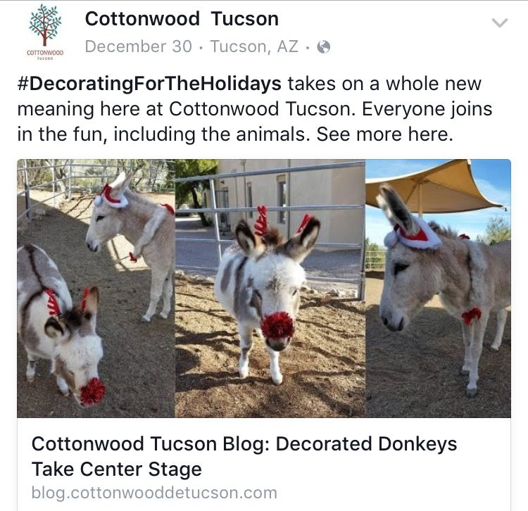 Pin by Cottonwood Tucson on Equine Therapy Animals
