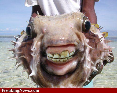Weird Fish 8