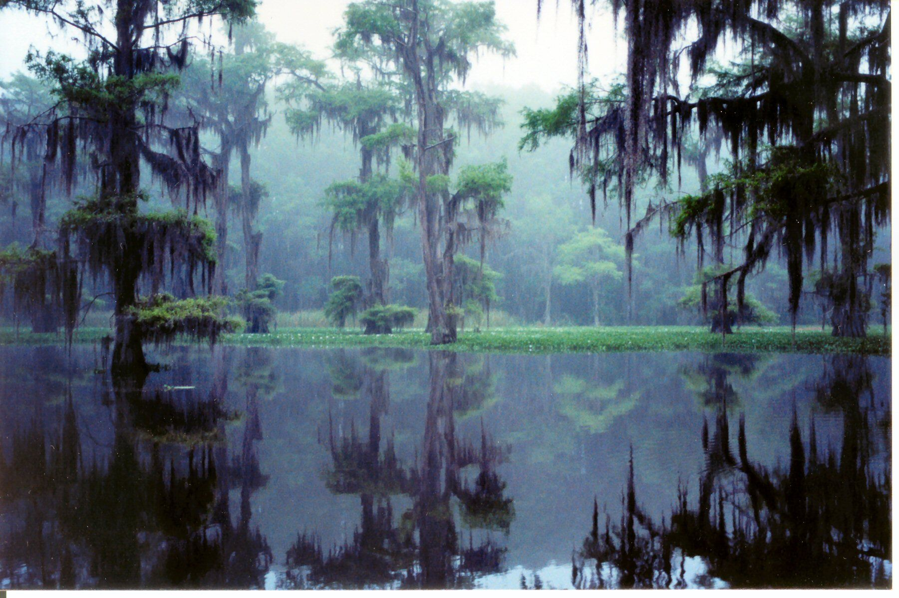 Caddo lake texas the only natural lake in texas for Caddo lake fishing