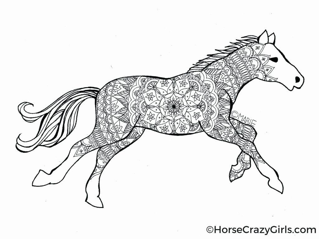 Pferd Ausmalbilder Zum Ausdrucken Schone Malvorlagen Pferdestall Wirbelsaul Animal Coloring Pages Malvorlagen Pferde Malvorlagen Tiere Ausmalbilder