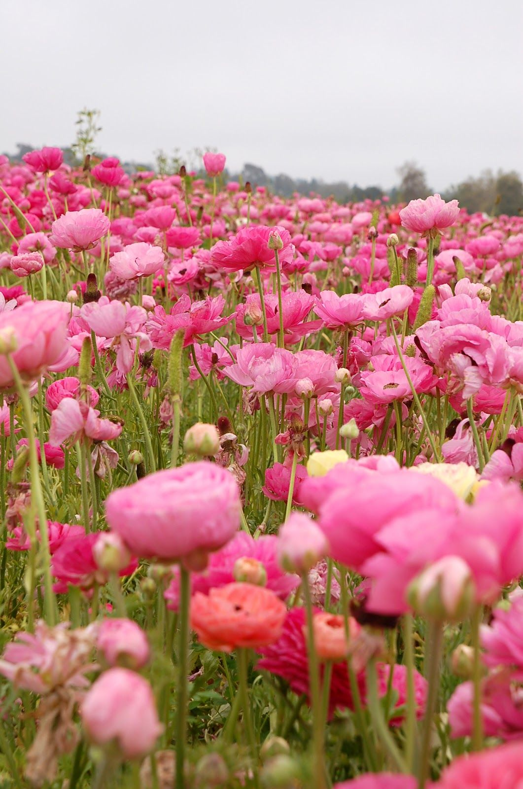 Fields of flowers make me very happy. I also photograph flowers ...