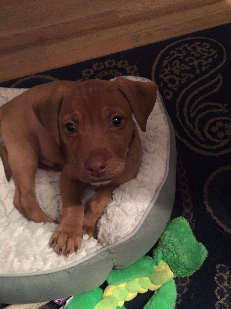 My new puppy everyone meet zeus cute pinterest