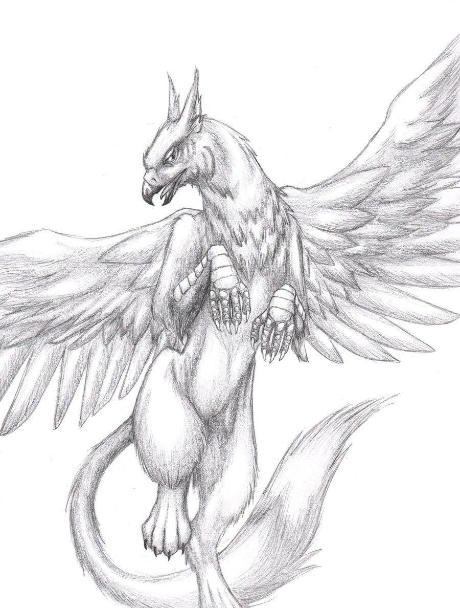 Pin De Laura Hunter Em Myth And Maddness Tatuagem De Grifo Desenho De Aves Tatuagem De Animais