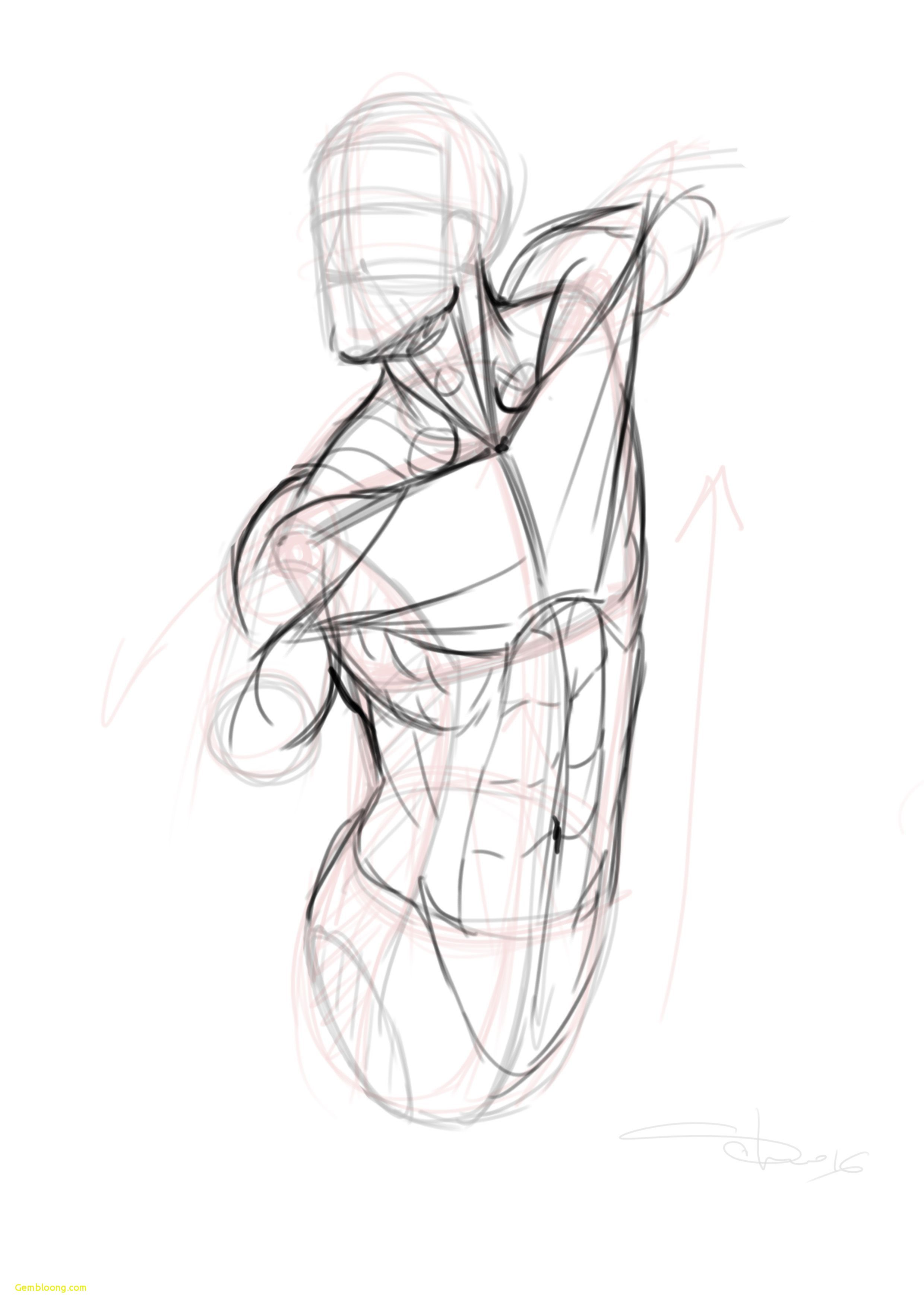 25 Ordinary Drawing Anatomy For Beginners Art Reference In 2019