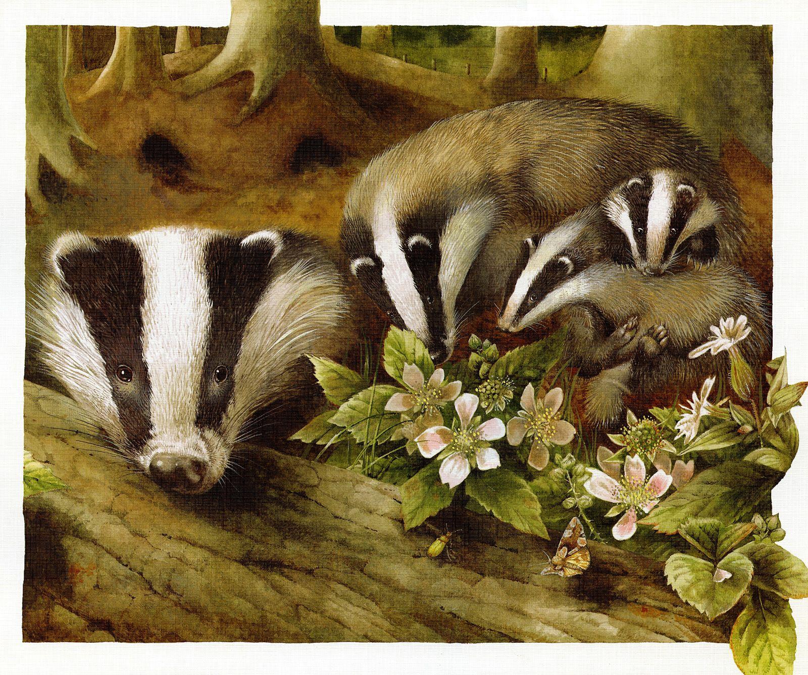Badgers - May 2012