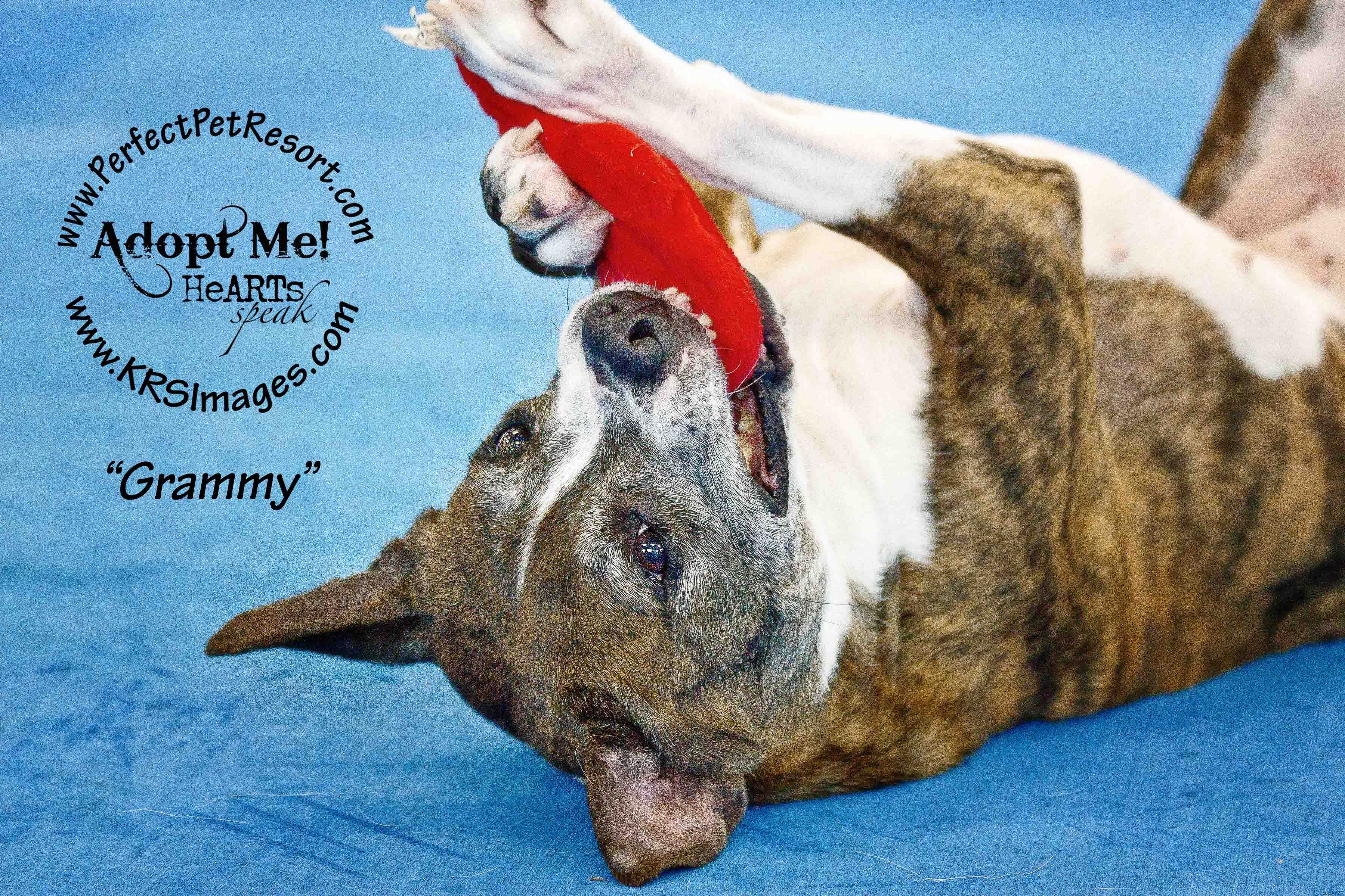 Grammy is a loveable active senior who is looking for her