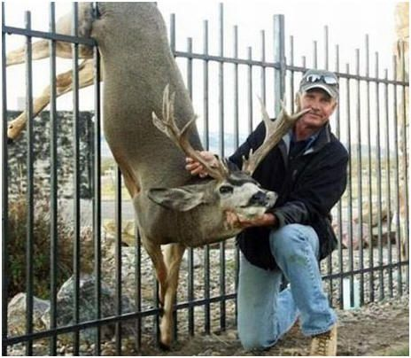 ideasforbehindbackfence keep deer out of your backyard and