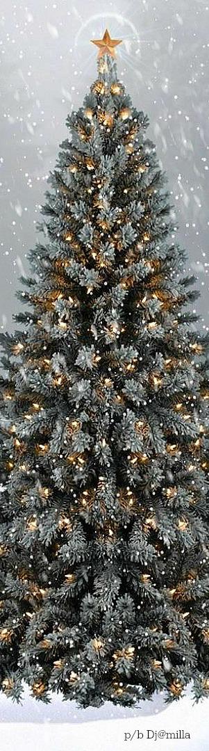 Lovely tree CHRISTMAS DECORATIONS Pinterest Holy night - white christmas tree decorations