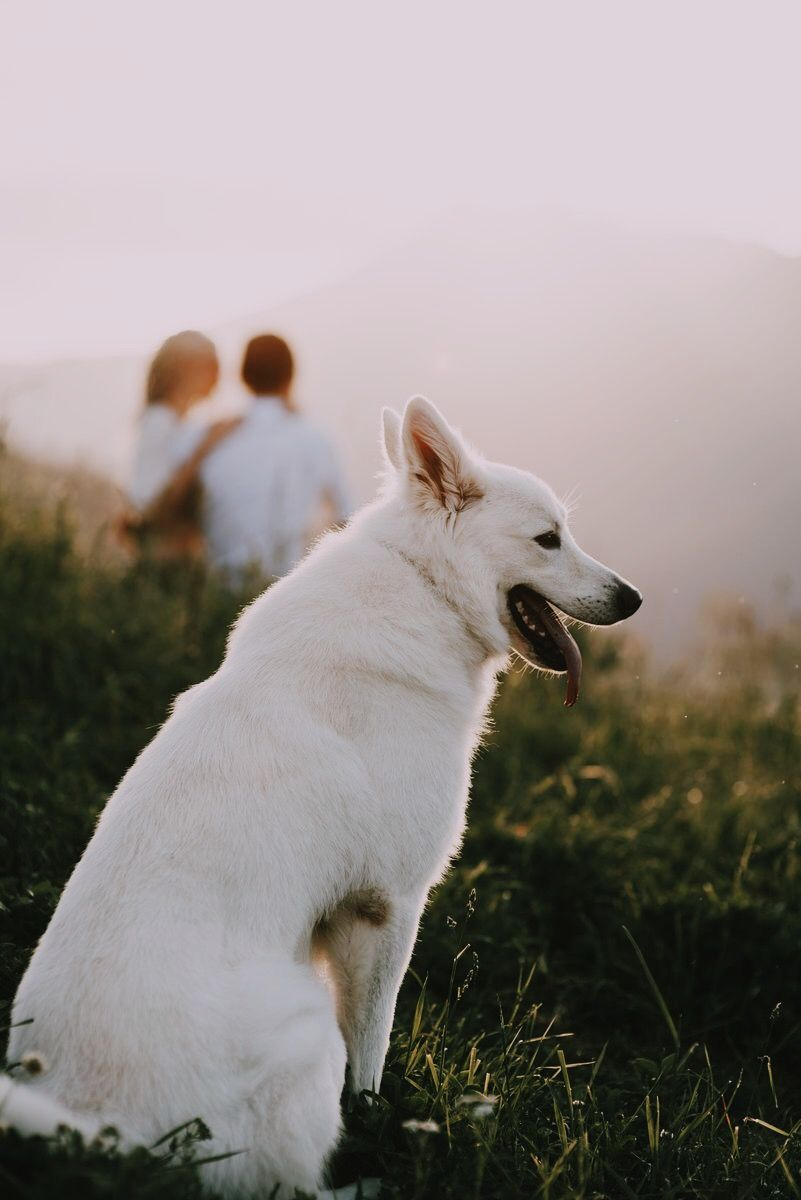 #Whitedog, #белаяовчарка #белаясобака