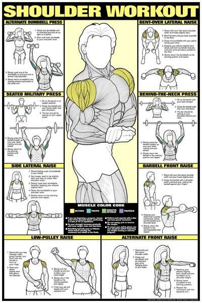 CO-ED Shoulder Workout Professional Fitness Gym Wall Chart Poster - Fitnus Posters #exercisexpath