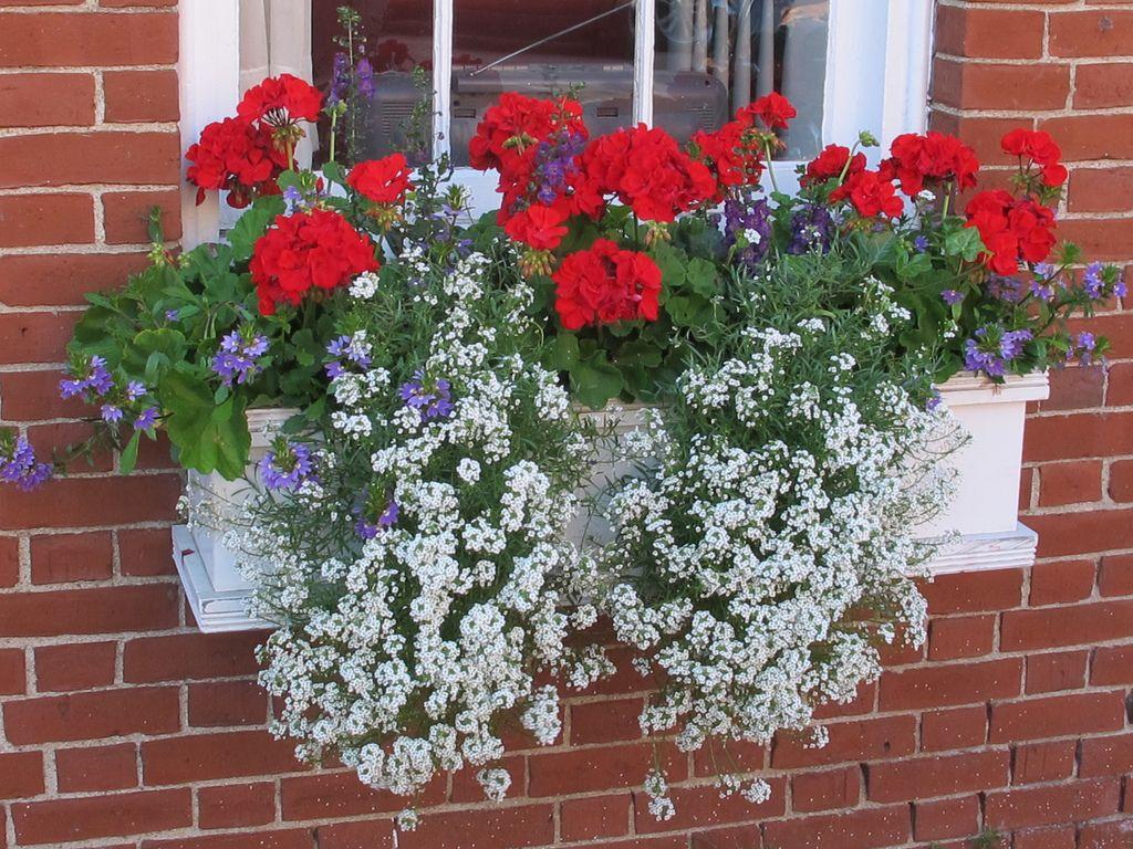 Window box Window box flowers, Container flowers, Flower