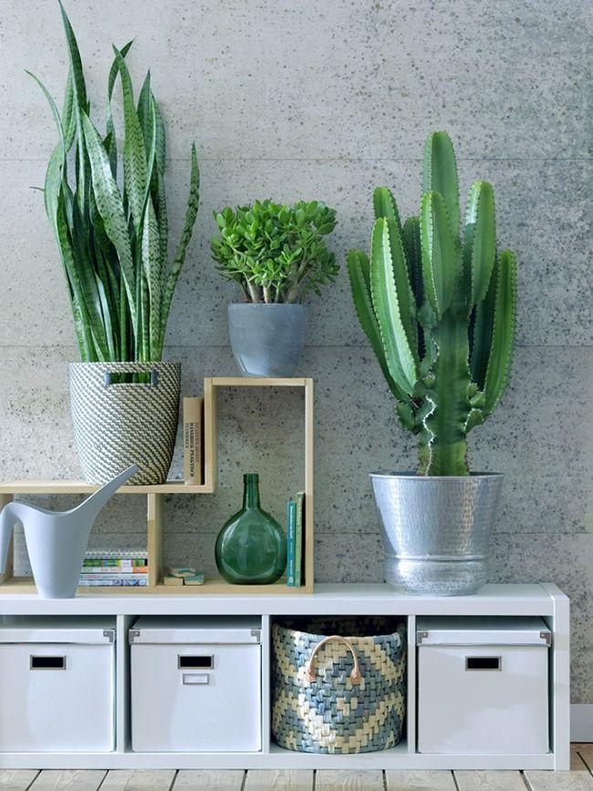 Sanseveria vrouwentong, crassula en euphorbia - kamerplanten ...