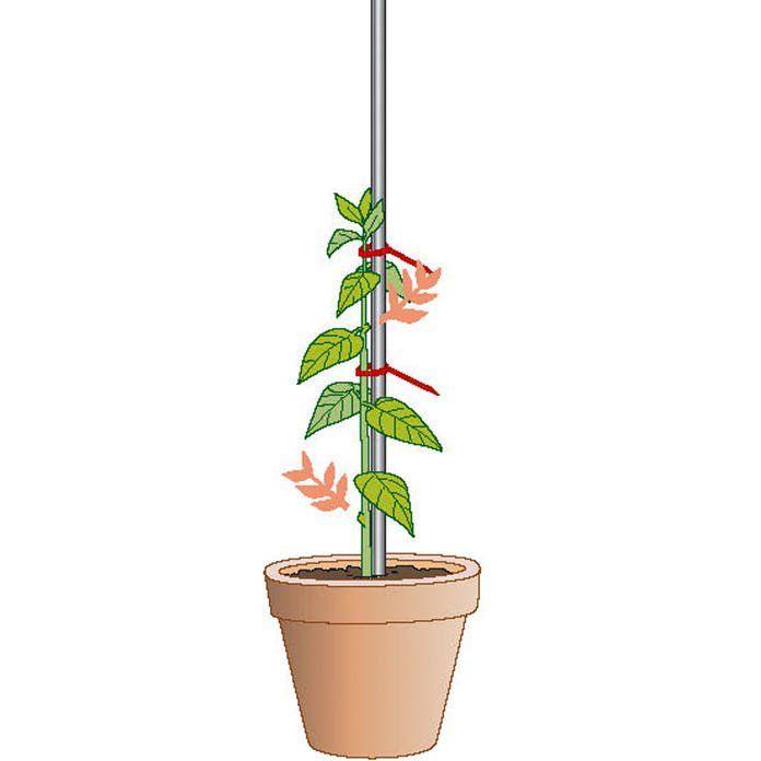 Hochstammchen Selber Ziehen So Gelingt S Garten Pflanzen Hochstammchen Kubelpflanzen