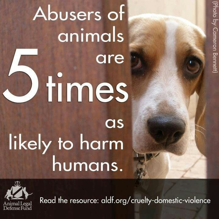animal abuse a people problem Children who abuse animals when a child hurts an animal, people need to pay attention (lewchanin & randour, 2008) risk factors for animal abuse by children even with many methodological problems noted in studies, cruelty to animals appears to be.