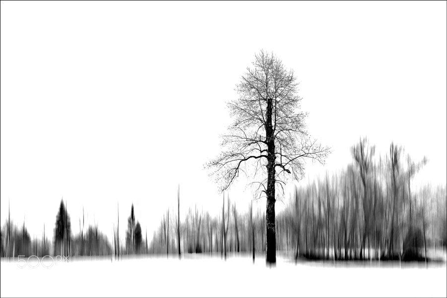 illusion by denisln9