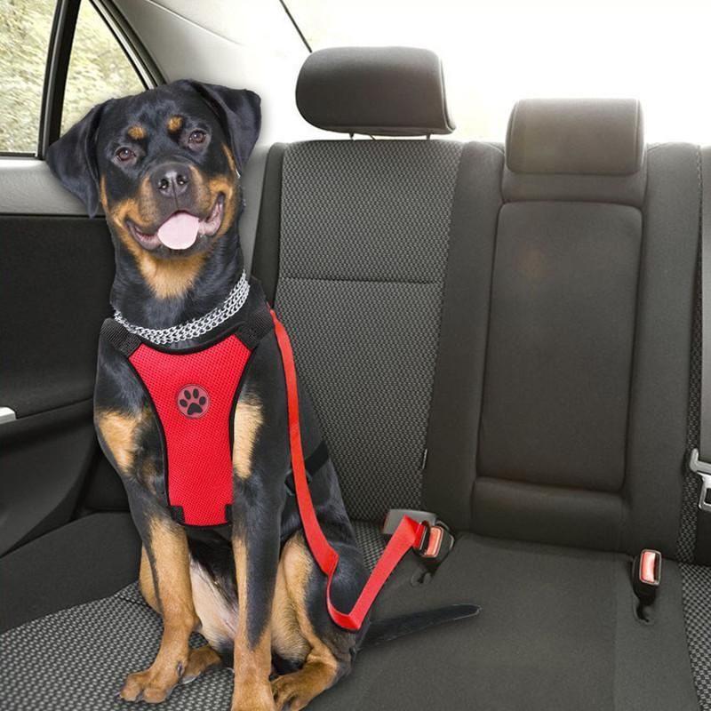 Car Dog Harness Leash With Adjustable Straps Harness And Car